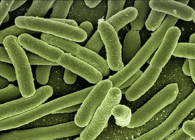 好気性細菌はミトコンドリアを持...
